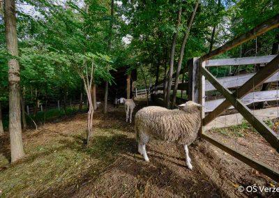 ND - Ekološko kmetovanje - OŠ Veržej 16
