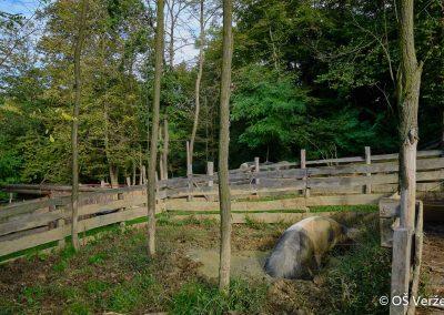 ND - Ekološko kmetovanje - OŠ Veržej 18